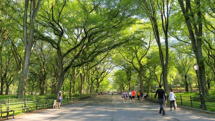 Aşağı Central Park Koşusu
