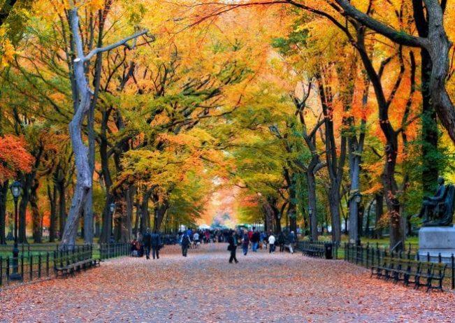 Central Park Yürüyüşü