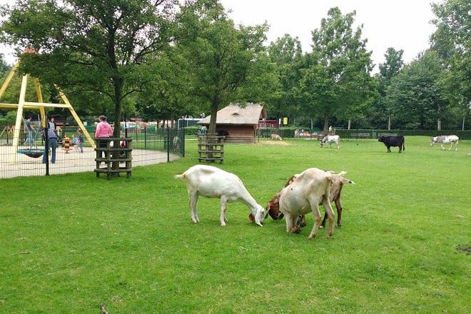 amstelpark hayvan çiftliği