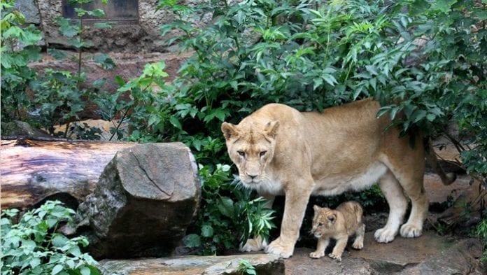 artis hayvanat bahçesi