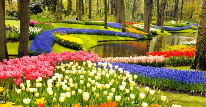 kuekenhof lale bahçeleri