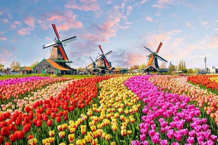Zaanse Schans'ın Yel Değirmenlerine Tur