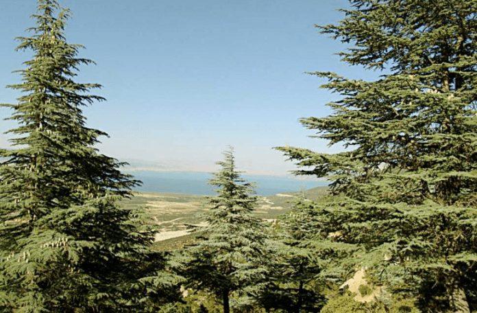 gelincik dağı
