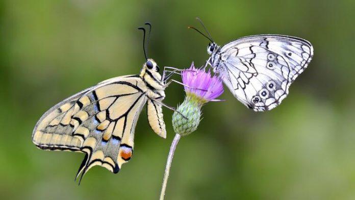 İstanbul Kelebek Çiftliği