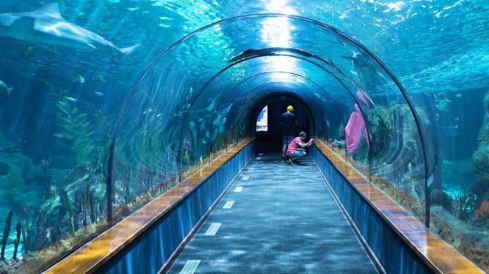 Sea Life Akvaryum