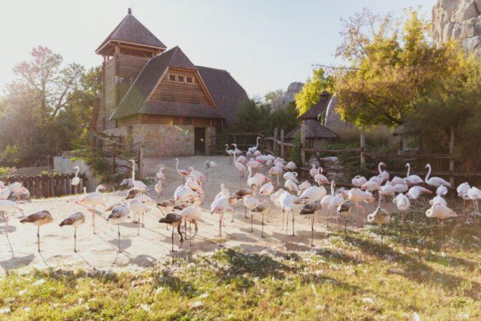 Budapeşte Hayvanat Bahçesi & Botanik Bahçe