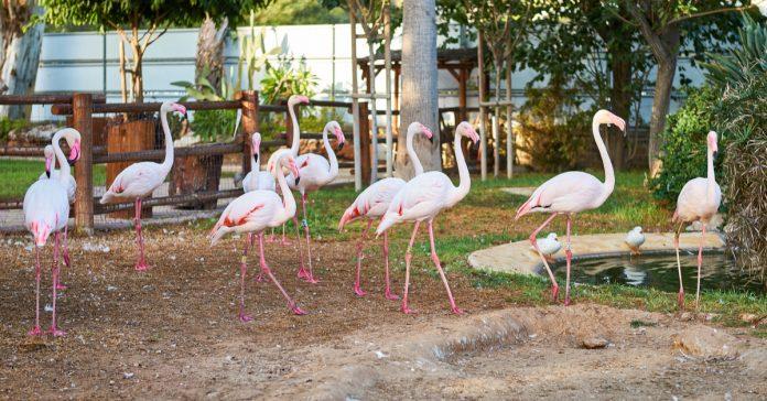 Limasol Hayvanat Bahçesi