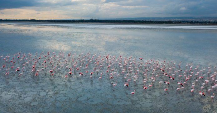 Limasol Tuz Gölü