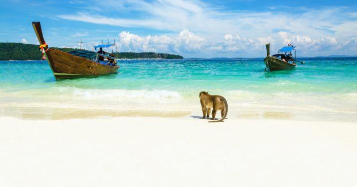 maymun plajı