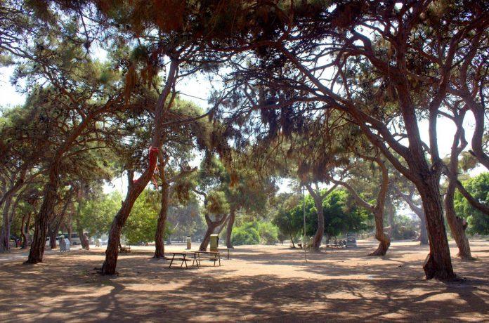 Talat Göktepe Çamlığı Kamp Alanı