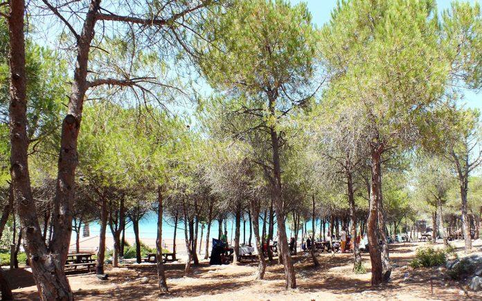 Tanay Tabiat Parkı