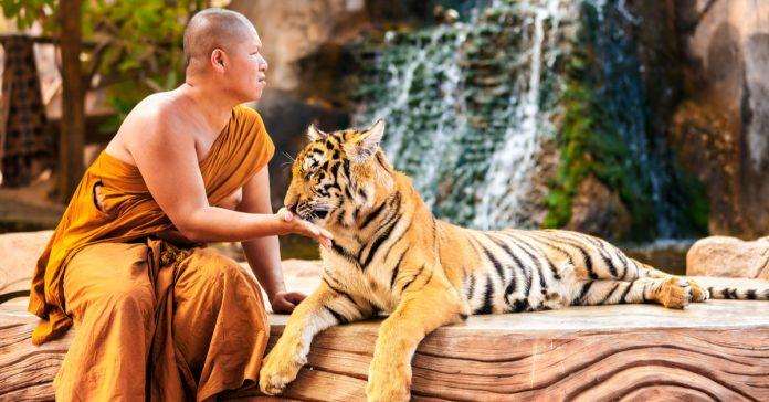 tiger kingdoom