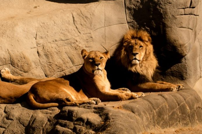 Hamburg Hayvanat Bahçesi