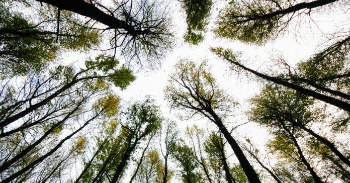 Köyceğiz Sığla Ormanı