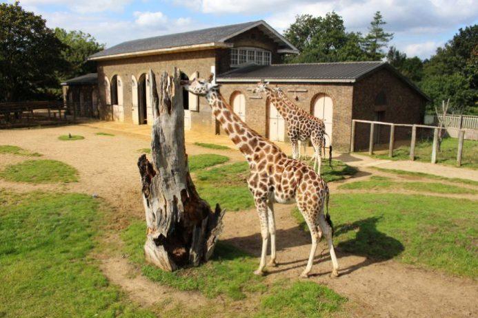 Londra Hayvanat Bahçesi