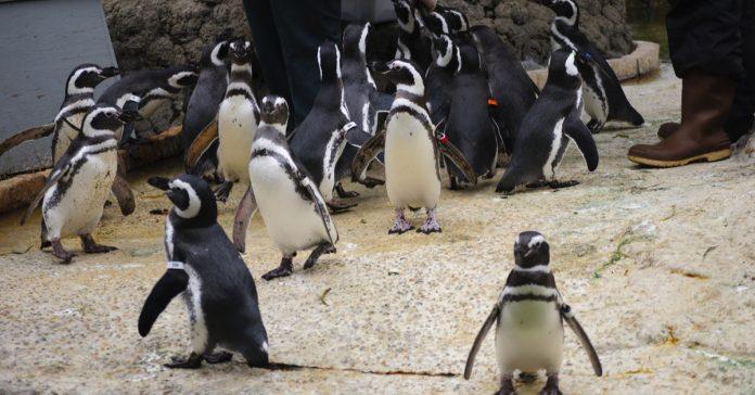san francisco hayvanat bahçesi