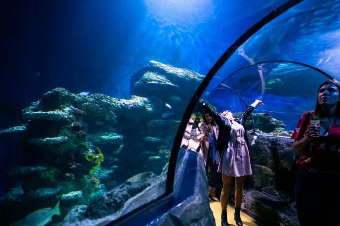 Sea Life Centre London Akvaryum