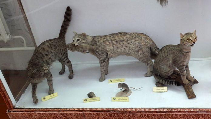 bişkek zooloji müzesi