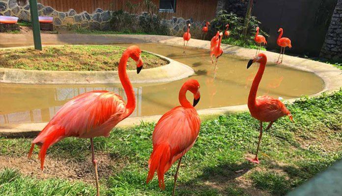 Darıca Kuş Cenneti ve Temalı Parkı