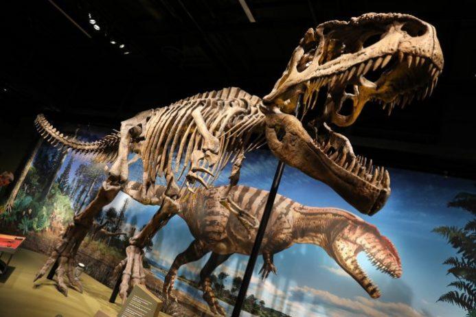 Denver Doğa ve Bilim Müzesi