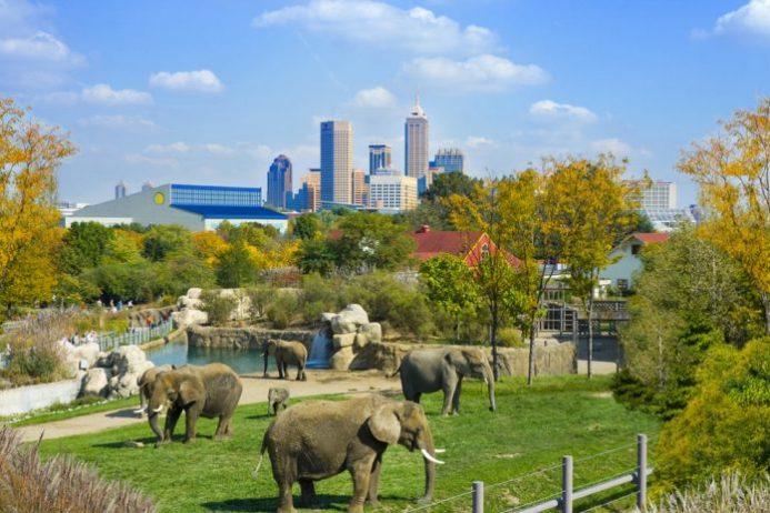 Denver Hayvanat Bahçesi