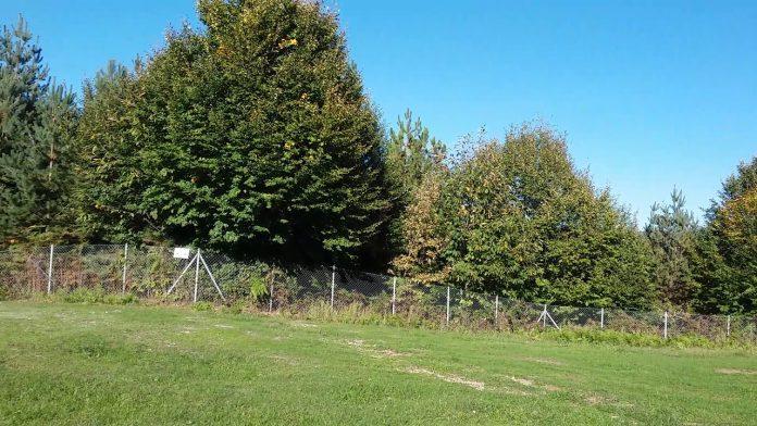 gırgın çayırı piknik ve mesire alanı
