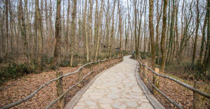 kocaeli kent ormanı