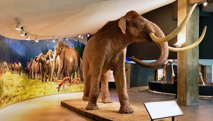 La Brea Katran Çukurları Müzesi