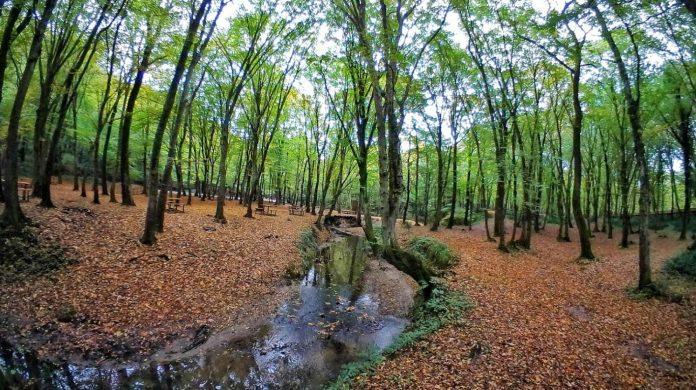 Ayvat Bendi Tabiat Parkı Kamp Alanı