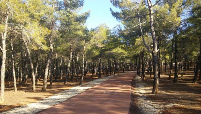 Burç Tabiat Parkı Kamp Alanı