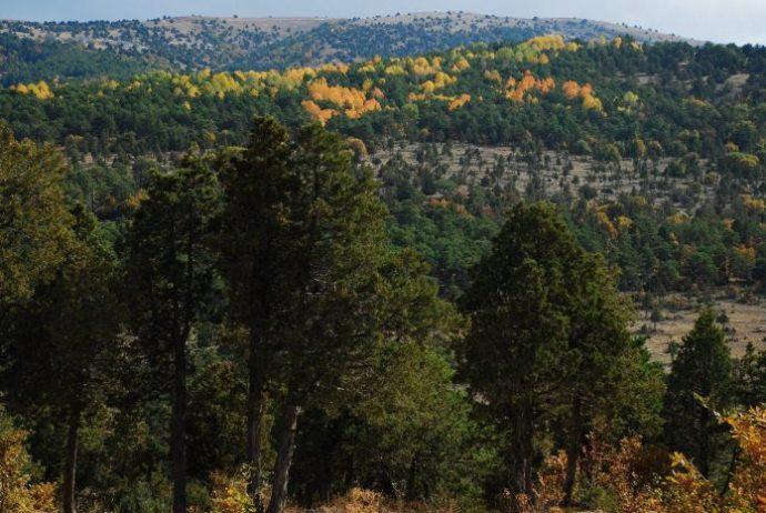 Çayıralan Ormanları