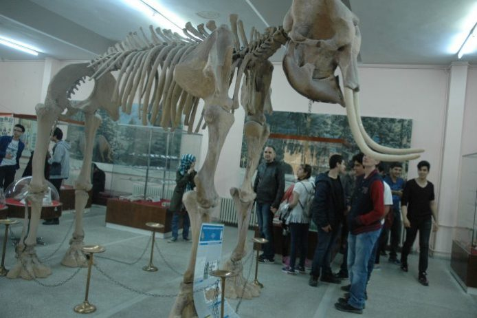 aegean university natural history museum