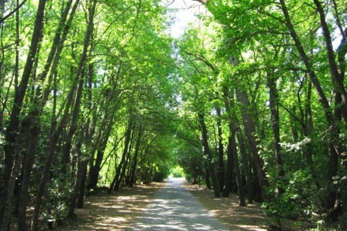 Karagöz Ormanları Kamp Alanı