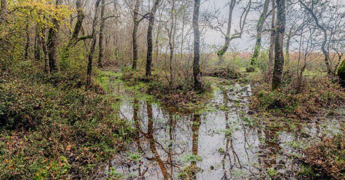 longoz ormanları