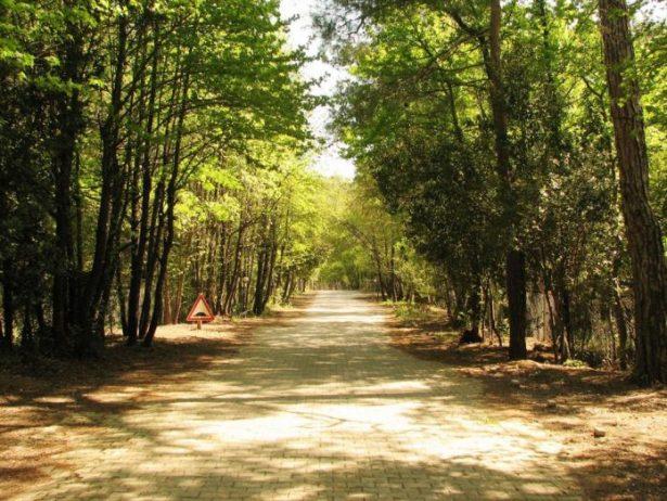 Marmaris Milli Parkı Kamp Alanı