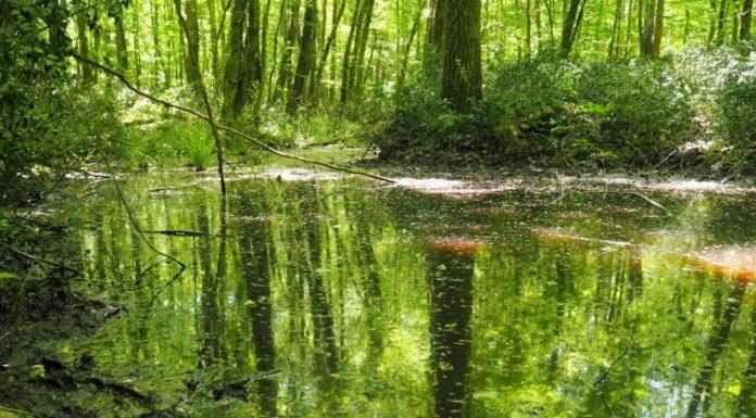 saka gölü langozu