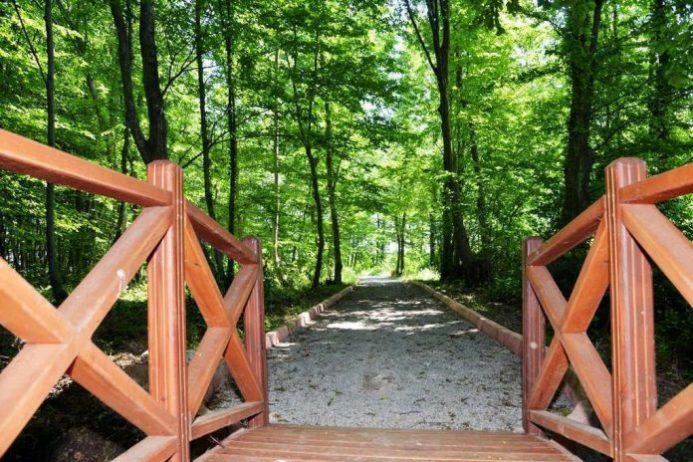 Samsun Kent Ormanı