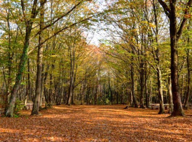 Taşdelen Piknik ve Kamp Alanı