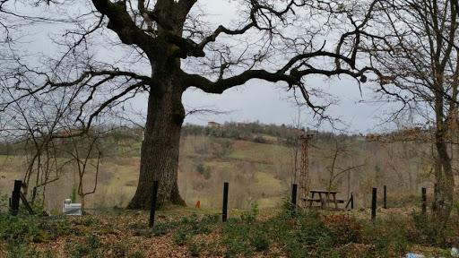 Veyisoğlu Köyü Anıt Ağacı