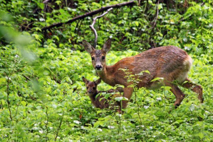 wildpardk dünnwald