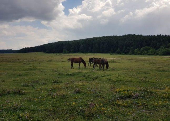 At Yaylası, Bolu