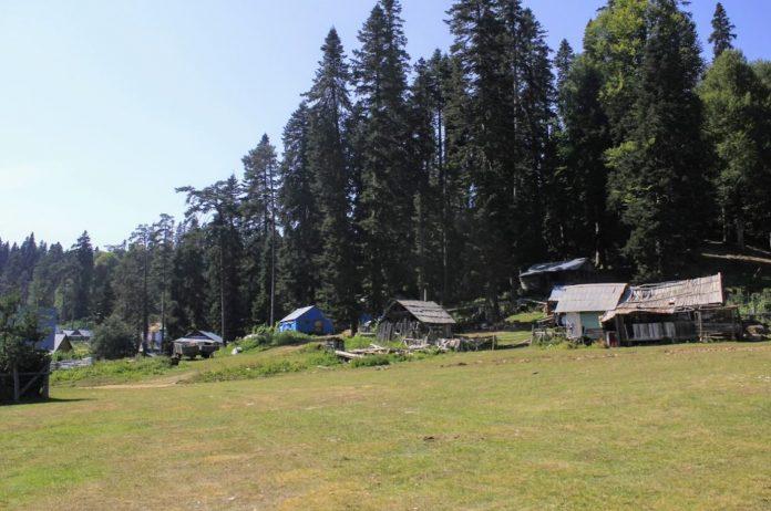 Balıklı Yaylası Kamp Alanı
