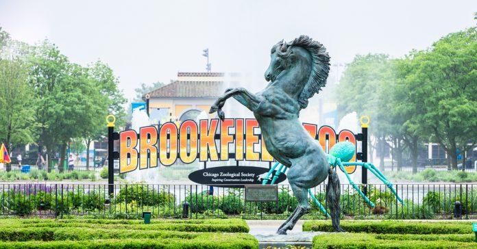 brookfield hayvanat bahçesi