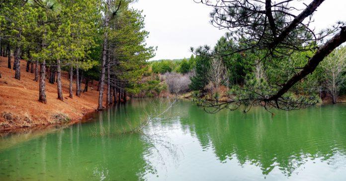 çamlık doğal parkı