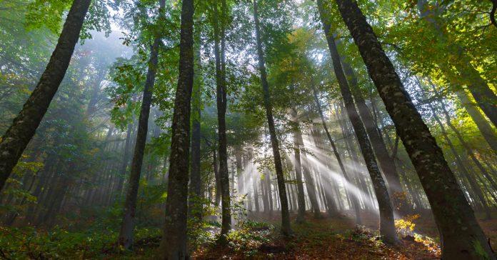 domaniç ormanları