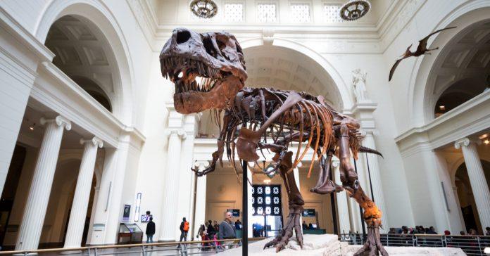 field doğa tarihi müzesi