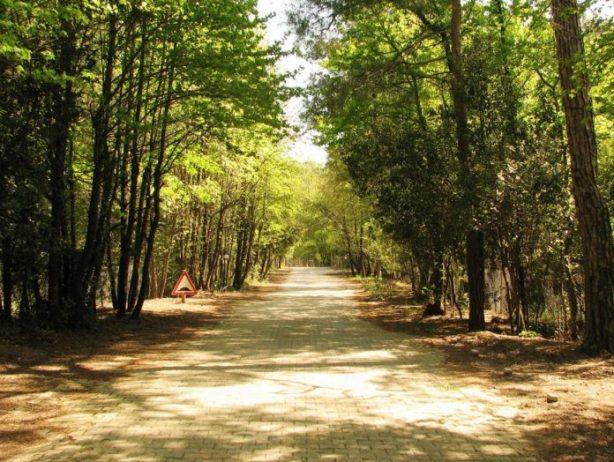 Günnücek Orman Kamp Alanı