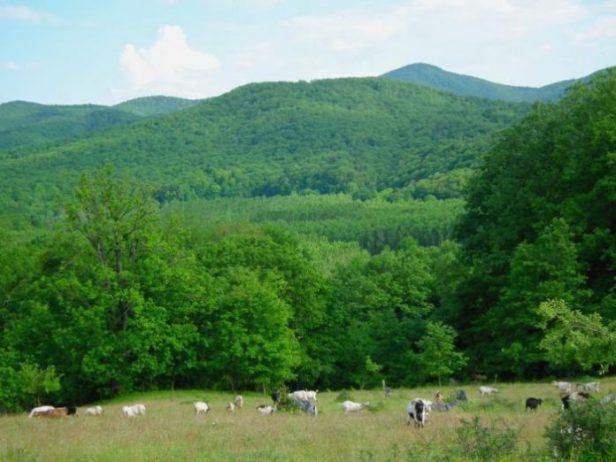Istranca Ormanları Kamp Alanı