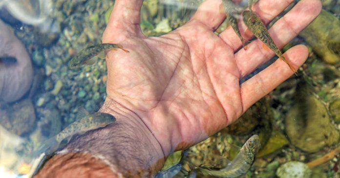 Kangal Balıklı Kaplıca