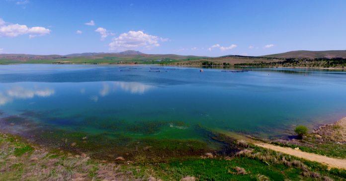 seyfe gölü kuş cenneti